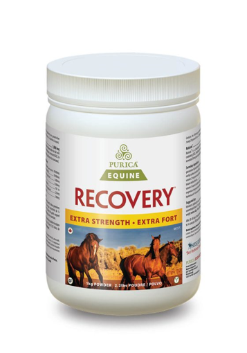 Picture of PURICA EQUINE RECOVERY EXTRA STRENGTH POWDER1KG